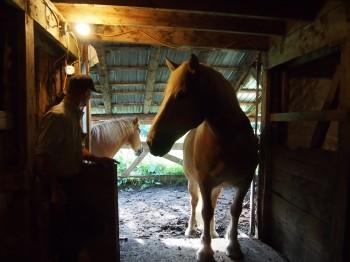 big horses
